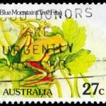 AUSTRALIA - CIRCA 1981 Tree Frog — Stock Photo #15497017