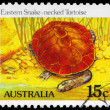 AUSTRALIA - CIRCA 1981 Eastern Snakenecked Tortoise - Stock Photo