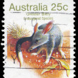 Stock Photo: AUSTRALI- CIRC1981 Greater Bilby