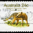 Stock Photo: AUSTRALI- CIRC1981 TasmaniTiger