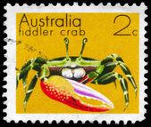 AUSTRALIA - CIRCA 1973 Fiddler Crab — Stock Photo