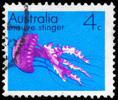 AUSTRALIA - CIRCA 1973 Mauve Stinger — Stock Photo