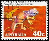 Australia - circa 1981 gecko de cola de pomo liso — Foto de Stock