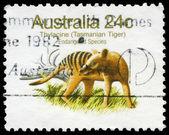 AUSTRALIA - CIRCA 1981 Tasmanian Tiger — Stock Photo