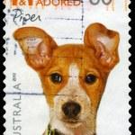 AUSTRALIA - CIRCA 2010 Piper — Stock Photo #15515537