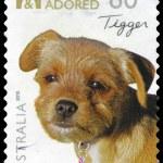 AUSTRALIA - CIRCA 2010 Tigger — Stock Photo #15516121