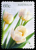 AUSTRALIA - CIRCA 2010 Tulips — Stock Photo