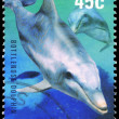 AUSTRALI- CIRC1998 Bottlenose Dolphin — Stock Photo #15521787