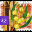 Stock Photo: AUSTRALI- CIRC1996 Blackwood wattle