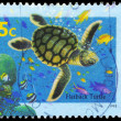 AUSTRALIA - CIRCA 1995 Flatback Turtle - Stock Photo