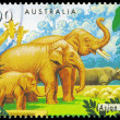 AUSTRALIA - CIRCA 1994 Asian Elephant — Stock Photo