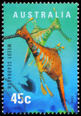 AUSTRALIA - CIRCA 1998 Seadragon — Stock Photo