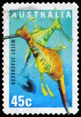 AUSTRALIA - CIRCA 1998 Sea Dragon — Stock Photo
