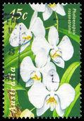 AUSTRALIA - CIRCA 1998 Phalaenopsis — Stock Photo