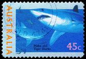AUSTRALIA - CIRCA 1995 Mako and Tiger Sharks — Stock Photo