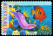 AUSTRALIA - CIRCA 1995 Flame Angelfish — Stock Photo