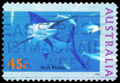 AUSTRALIA - CIRCA 1995 Black Marlin — Stock Photo