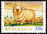 AUSTRALIA - CIRCA 1989 Merino — Stock Photo