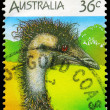 Stock Photo: AUSTRALI- CIRC1986 Emu