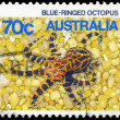 AUSTRALIA - CIRCA 1984 Octopus — Stock Photo