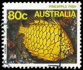 Australien - circa 1984 cleidopus — Stockfoto