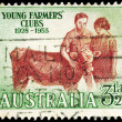 AUSTRALIA - CIRCA 1953 Calf — Stock Photo