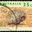 Stock Photo: AUSTRALI- CIRC1992 Echidna