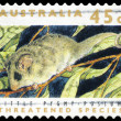 Stock Photo: AUSTRALI- CIRC1992 Little Pygmy Possum