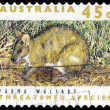 AUSTRALIA - CIRCA 1992 Parma Wallaby — Stock Photo