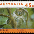 AUSTRALIA - CIRCA 1994 Koala on Tree — Stock Photo