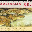 AUSTRALI- CIRC1994 Saltwater Crocodile — Stock Photo #16297481