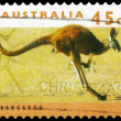 Stock Photo: AUSTRALI- CIRC1995 Kangaroo