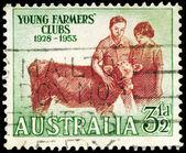 AUSTRALIA - CIRCA 1953 Calf — Stock Photo