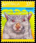 AUSTRALIA - CIRCA 1987 Wombat — Stock Photo