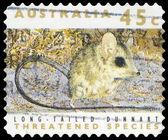 AUSTRALIA - CIRCA 1992 Dunnart — Stock Photo
