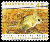 AUSTRALIA - CIRCA 1992 Dusky Hopping Mouse — Stock Photo