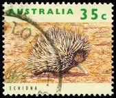 AUSTRALIA - CIRCA 1992 Echidna — Stock Photo