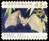 AUSTRALIA - CIRCA 1992 Ghost Bat — Stock Photo
