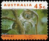 AUSTRALIA - CIRCA 1994 Koala on Tree — Stock Photo