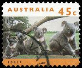 Austrália - circa 1994 coalas — Foto Stock