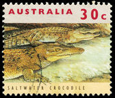 AUSTRALIA - CIRCA 1994 Saltwater Crocodile — Stock Photo