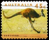 Austrália - por volta de 1995 canguru — Foto Stock