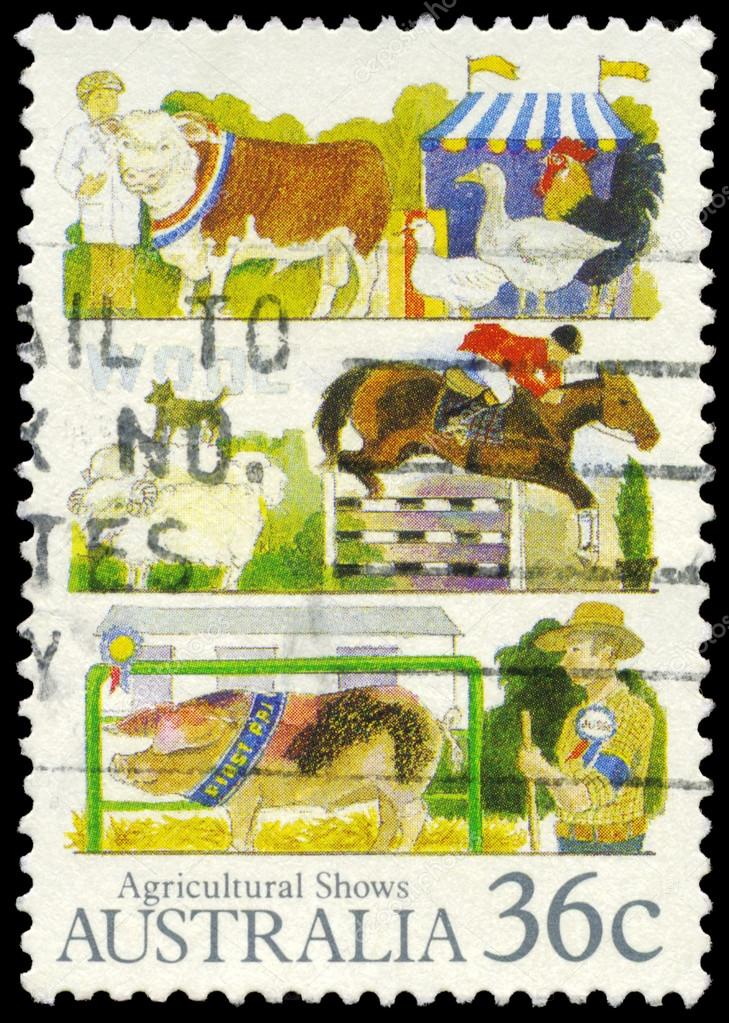 AUSTRALIA - CIRCA 1987: A Stamp printed in AUSTRALIA shows the Livestock, Agricultural Shows series, circa 1987  Stock Photo #16296063