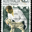 AUSTRALIA - CIRCA 1971 Man and Lamb — Stock Photo