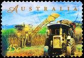 AUSTRALIA - CIRCA 1998 Sugar Cane Harvesting — Stock Photo