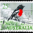 Stock Photo: AUSTRALIA - CIRCA 1965 Scarlet Robin