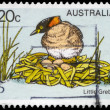 AUSTRALIA - CIRCA 1978 Little Grebe - Stock Photo