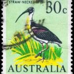 AUSTRALIA - CIRCA 1966 Ibis — Stock Photo #22959270
