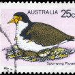 AUSTRALIA - CIRCA 1978 Masked Plover — Stock Photo