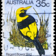 AUSTRALIA - CIRCA 1980 Regent Bowerbird — Stock Photo